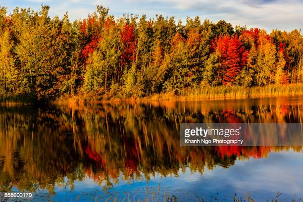 reflections of colorful fall in canada - moncton stock photos and pictures