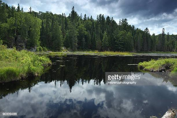 reflections of nature - beaver dam stock pictures, royalty-free photos & images