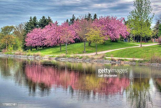 Reflections of Spring Blooms