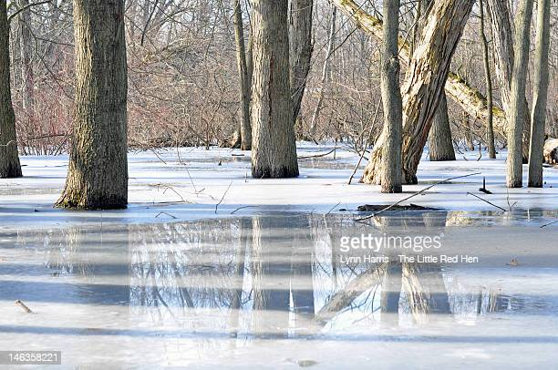 Reflections of tree trunks