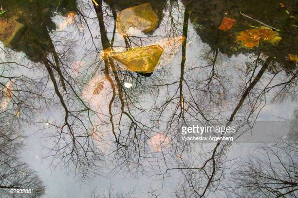 reflections of trees and sky in zhangjiajie river, hunan, china - argenberg stock-fotos und bilder