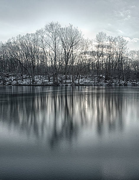 Reflections of trees and snow in a frozen lake