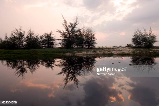 Reflections of trees in a calm lake.