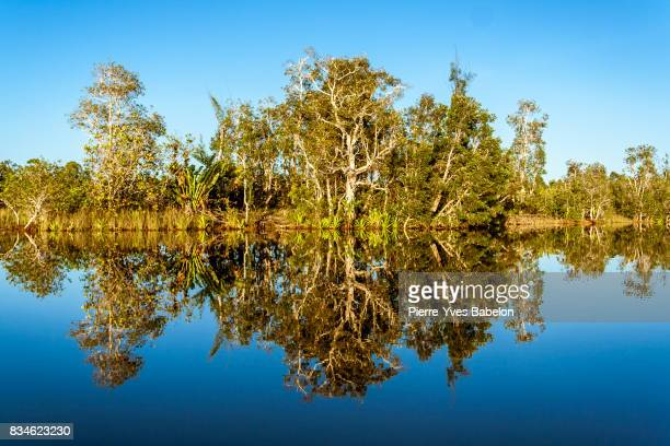 Reflections of tropical vegetation