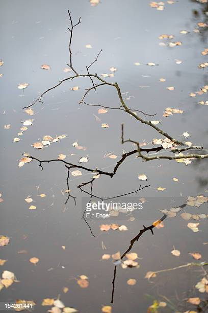 Reflections of twigs and floating leaves.