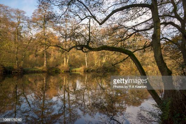 Reflections on the river Derwent, Derbyshire, England