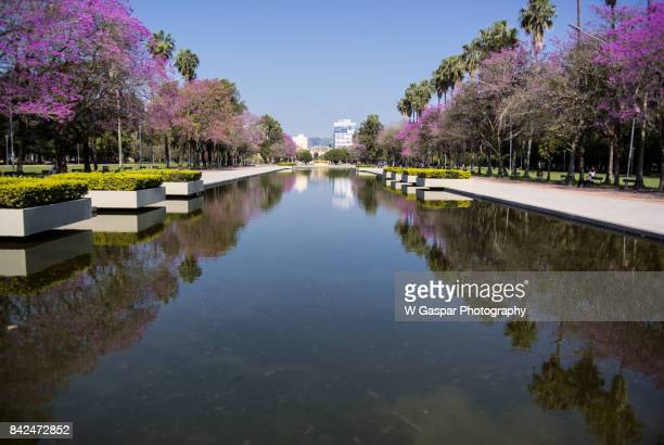 reflections on the water at farroupilha park - porto alegre stock pictures, royalty-free photos & images