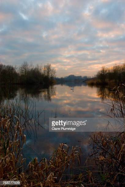 reflections - claire plumridge stock pictures, royalty-free photos & images