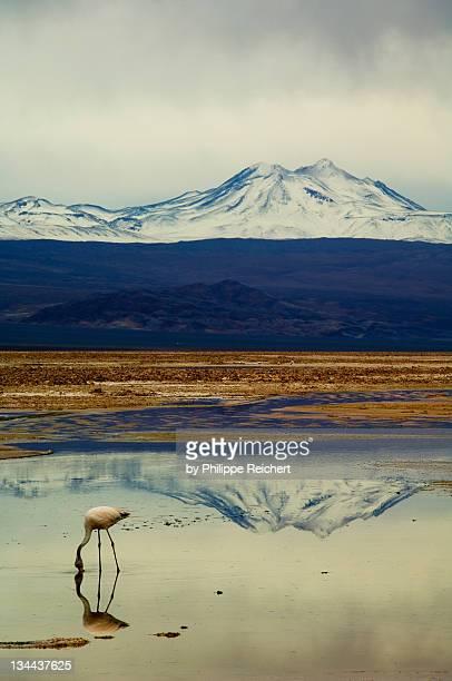 Reflections, salar de Atacama, Chile