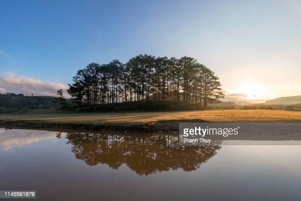 Reflective pine island by lake side
