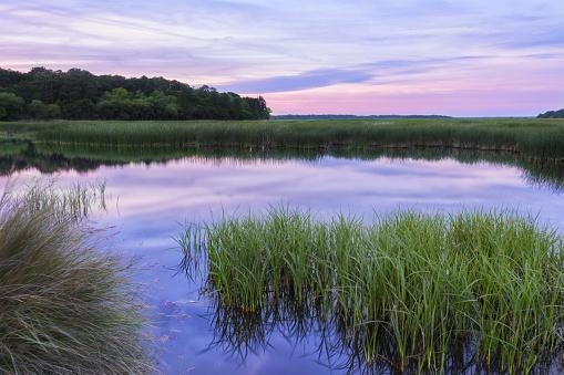 Reflective South Carolina Lowcountry Marsh Scene Sunset ACE Basin 529069996