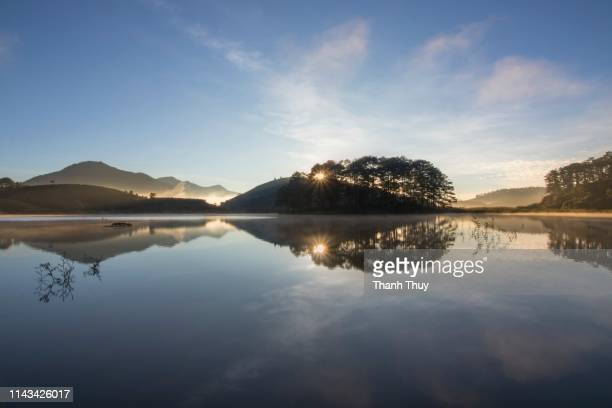 reflective trees on the lake - new zealand stockfoto's en -beelden