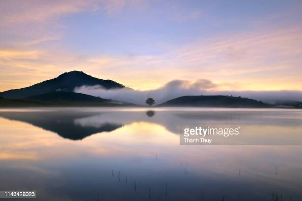 reflective trees on the lake - new zealand stockfoto's en -beelden