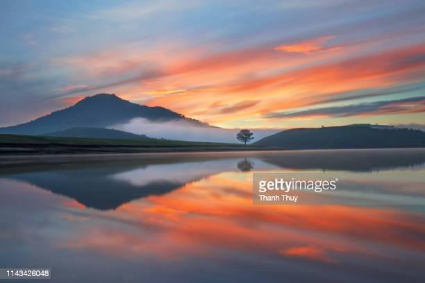 reflective trees on the lake - new zealand stock-fotos und bilder
