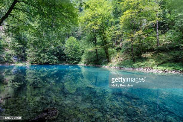 reflective turquoise water of kupa wellspring - freshwater stock pictures, royalty-free photos & images