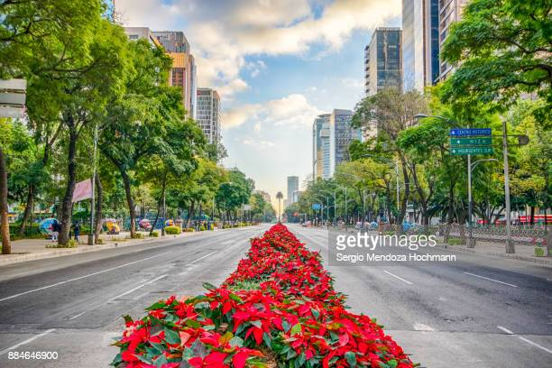 reforma avenue with poinsettia plants in the middle - mexico city, mexico - avenue stock pictures, royalty-free photos & images