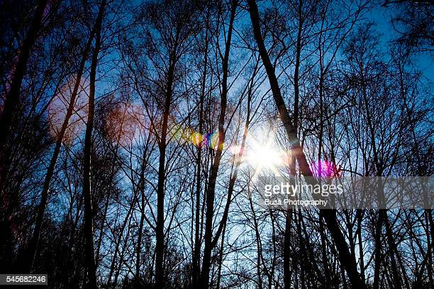 Refraction of sun light in a forest on a clear winter day