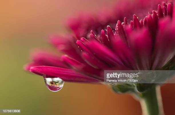 refraction - lily wilson stock pictures, royalty-free photos & images