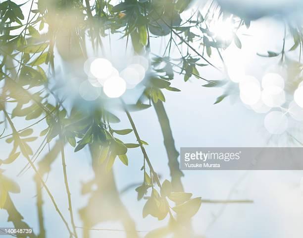 refrection of tree - 反射 ストックフォトと画像