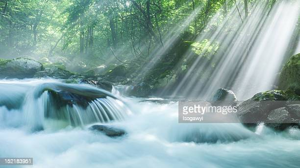 refreshing morning - isogawyi stock pictures, royalty-free photos & images