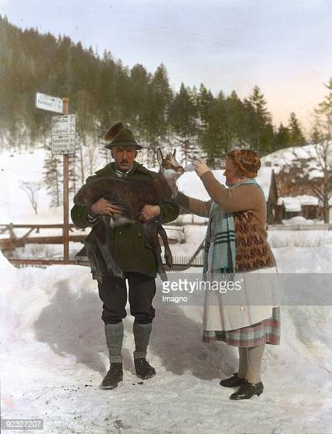 Refreshing of an exhausted chamois Lower Austria Handcolored lantern slide Around 1910