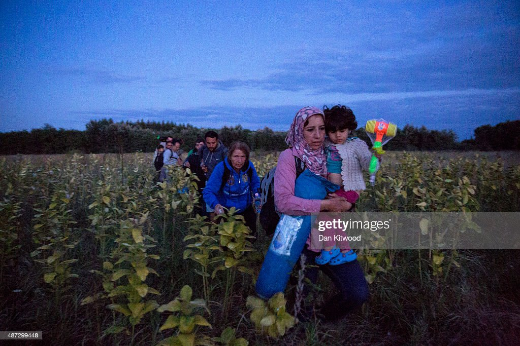 Refugees are smuggled through fields and forests in an attempt to evade the Hungarian police close to the Serbian border on September 8, 2015 in Roszke, Hungary. Many migrants fear that if they are forced to officially register and have their fingerprints taken, it will stop them being able to move freely out of Hungary and further into Europe. A lack of clarity on the issue is causing many people to risk being arrested unnecessarily by taking such measures. Thousands of migrants have continued to cross into Hungary over the last few days from Serbia. Since the beginning of 2015 the number of migrants using the so-called 'Balkans route' has exploded with migrants arriving in Greece from Turkey and then travelling on through Macedonia and Serbia before entering the EU via Hungary. The number of people leaving their homes in war torn countries such as Syria, marks the largest migration of people since World War II.