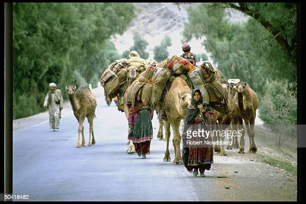 Refugees from Jalalabad walking on road w. Camels during Mujahedeen rebel assault on Jalalabad.