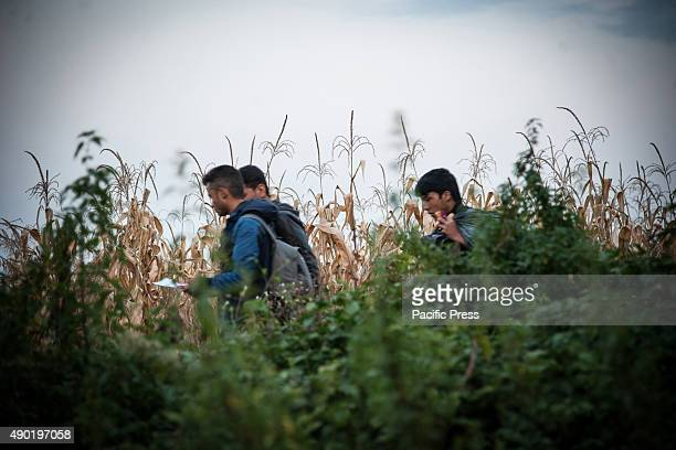 BORDER BAPSKA SYRMIA CROATIA Refugees walk on the path leading to the SerbianCroatian border Migrants come to Europe for asylum and hope for better...