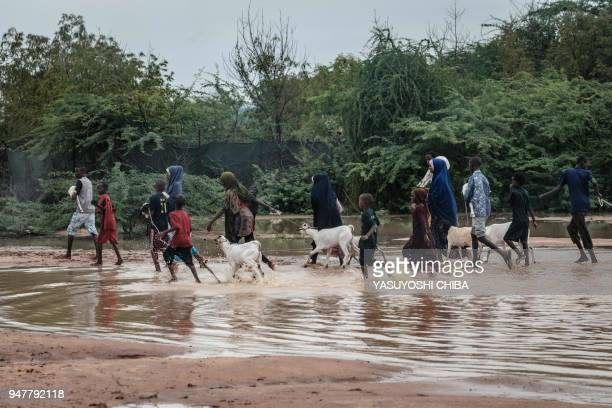 Refugees walk with their goats in floodwaters after a heavy rainy season downpour as they seek to fill sandbags at the Dadaab refugee complex, in the...