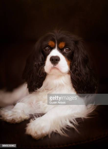 regal - dustin abbott stock pictures, royalty-free photos & images