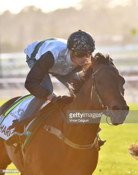 Regan Bayliss riding Harlem during a trackwork session at Flemington Racecourse on October 31 2017 in Melbourne Australia
