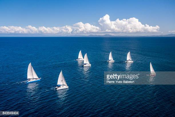 Regatta sailboat and catamaran