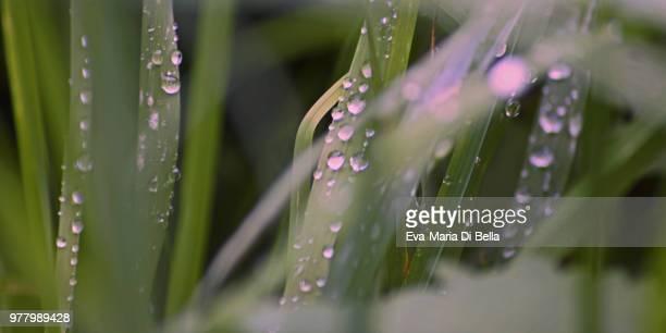 regentropfen an grashalmen - raindrops - regentropfen stock pictures, royalty-free photos & images