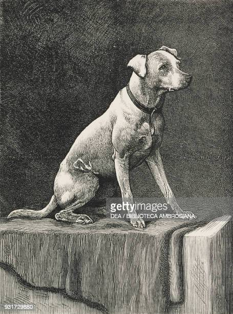 Regimental Jack dog used in the Afghan war United Kingdom illustration from the magazine The Graphic volume XXV no 636 February 4 1882