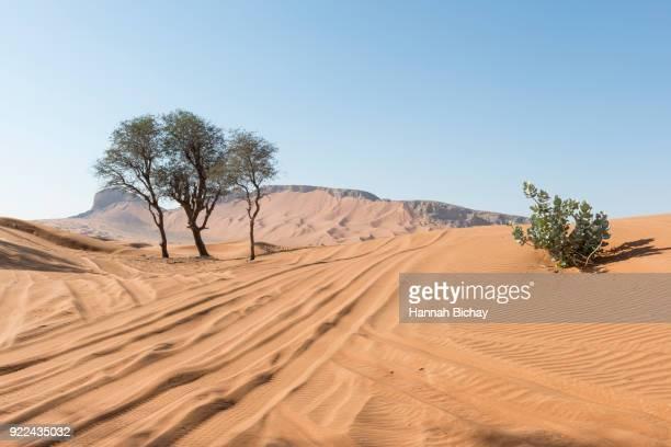 Reifenspuren in der Wüste von Dubai