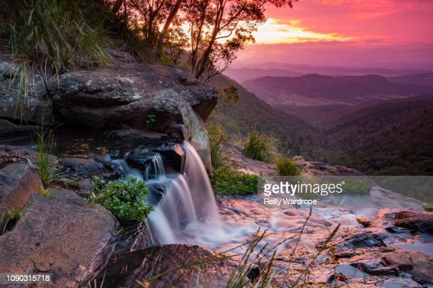 o'reillys rainforest at sunset - non urban scene stock pictures, royalty-free photos & images
