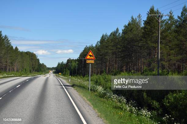 reindeer crossing sign at road near vaasa, finland - animal crossing stock pictures, royalty-free photos & images