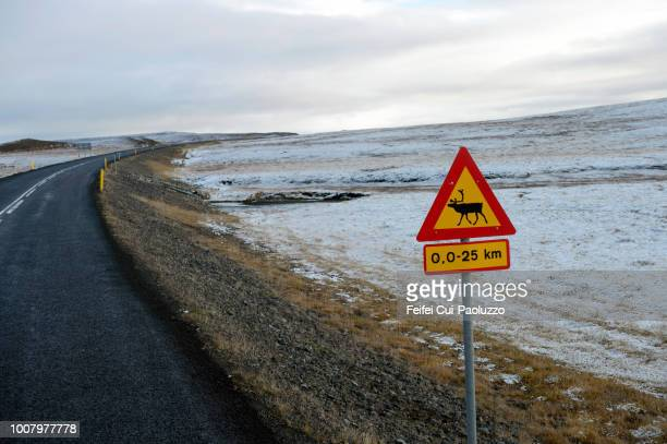reindeer crossing sign on the road near egilsstaðir, iceland - animal crossing stock pictures, royalty-free photos & images