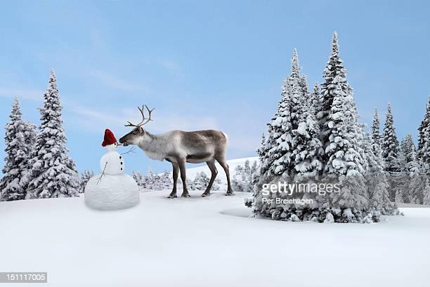A reindeer eats the snowman's nose