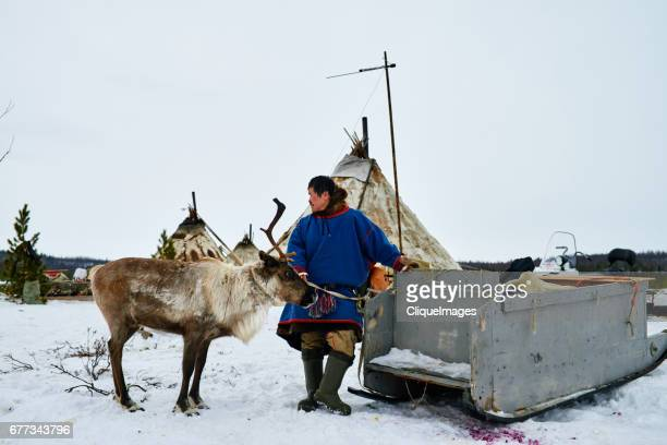 reindeer herder in northern siberia - cliqueimages stock pictures, royalty-free photos & images