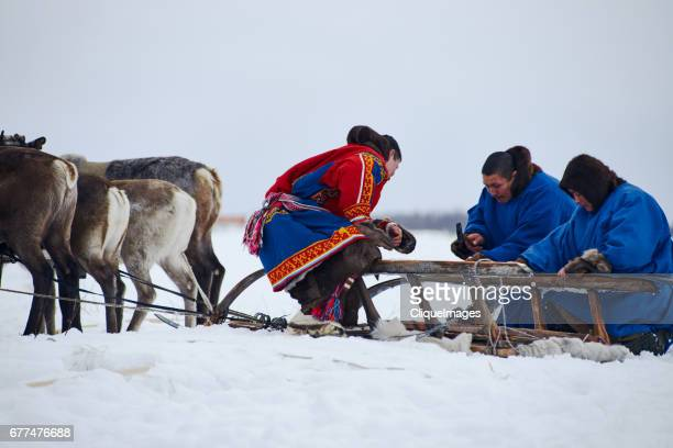 reindeer herders fixing sled - cliqueimages stockfoto's en -beelden