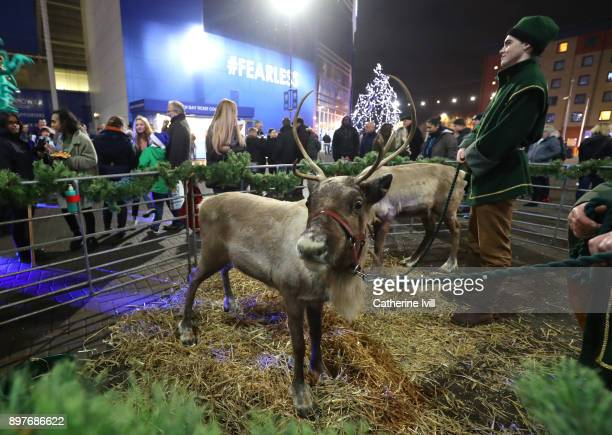 Reindeer is pictured prior to the Premier League match between Leicester City and Manchester United at The King Power Stadium on December 23 2017 in...