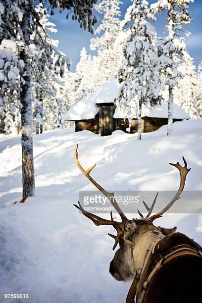 reindeer parked outside hut - hut stock pictures, royalty-free photos & images
