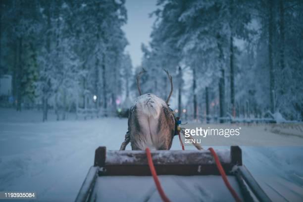 reindeer sled in winter in santa claus village, rovaniemi, finland - 橇 ストックフォトと画像
