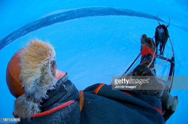 reindeer sledding party - swedish lapland stock photos and pictures