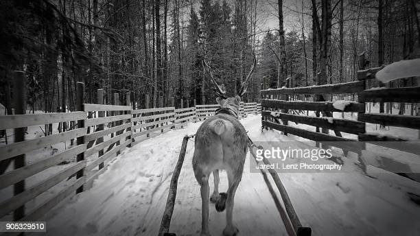 Reindeer Sleigh Ride in Black and White