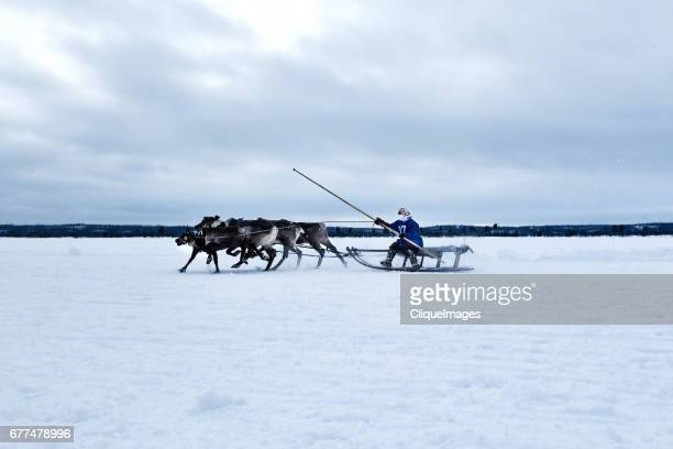 reindeer sleigh ride - cliqueimages stock pictures, royalty-free photos & images