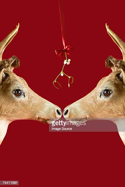 Reindeer underneath mistletoe