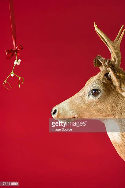 A reindeer underneath mistletoe