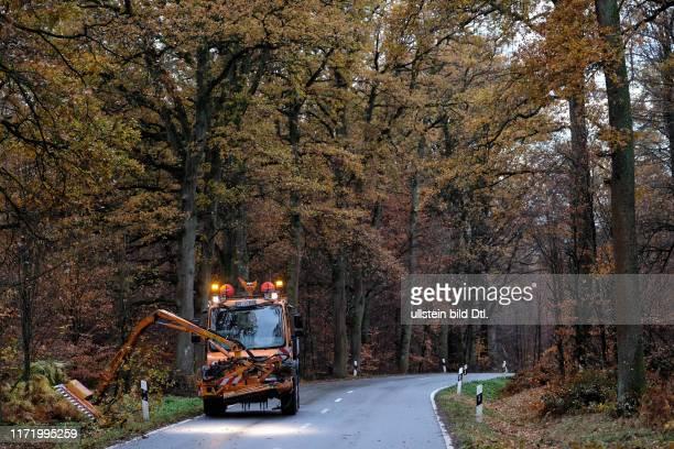 Reinhardswald Hessen Nordhessen Hessen bei Kassel Urwald Bürgerinitiative gegen Windkraft Windräder Wald Baum Bäume Unterholz Farne Farn Weser...